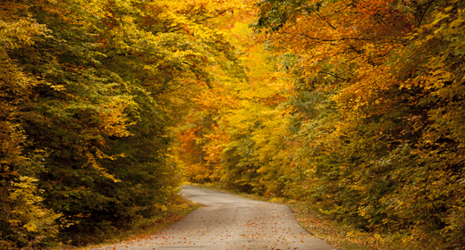muskoka-fall-guide-2