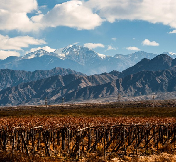 Take a Virtual Wine Vacation through the World?s Top Emerging Vineyards